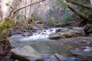 Coho salmon spawning habitat on the McCoy Creek property owned by Siskiyou Land Conservancy.